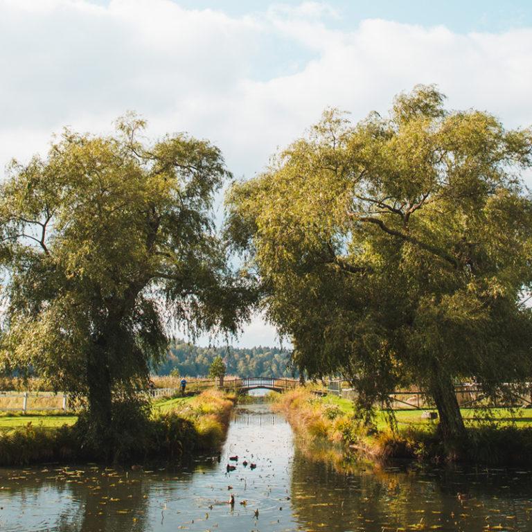 Grönskande träd vid en vacker damm